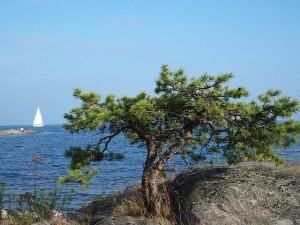Übersetzer deutsch schwedisch Segeln in Schweden